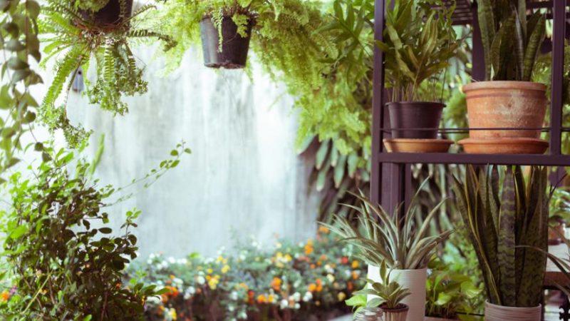 Comment faire un jardin d'hiver dans la maison ?